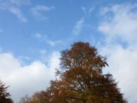 Chatsworth estate