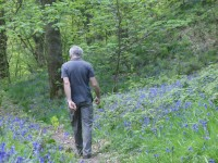 Chris in bluebell woods